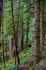 Quinault Graves Creek-1