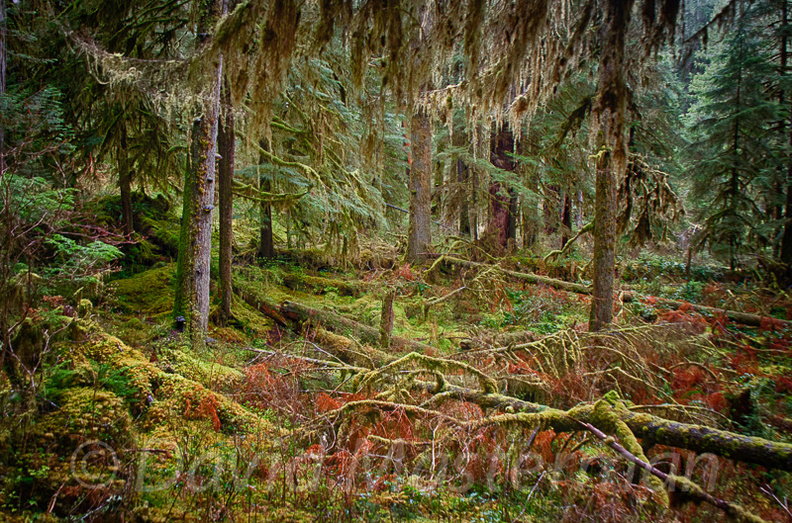 Quinault_Graves_Creek-5.jpg