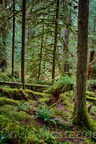 Quinault Graves Creek-6