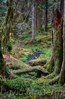 Quinault Graves Creek-14