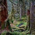 Quinault Graves Creek-15