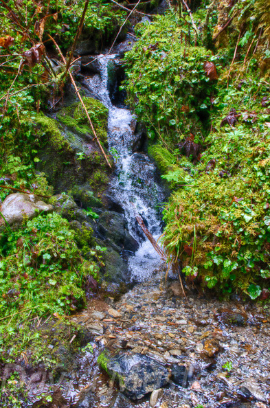 Quinault_Graves_Creek-19.jpg