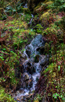 Quinault Graves Creek-20