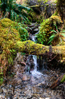 Quinault Graves Creek-21