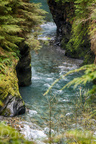 Quinault Graves Creek-22