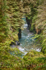 Quinault Graves Creek-23
