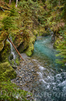 Quinault Graves Creek-26