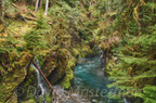 Quinault Graves Creek-27