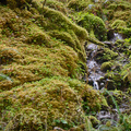 Quinault Graves Creek-28